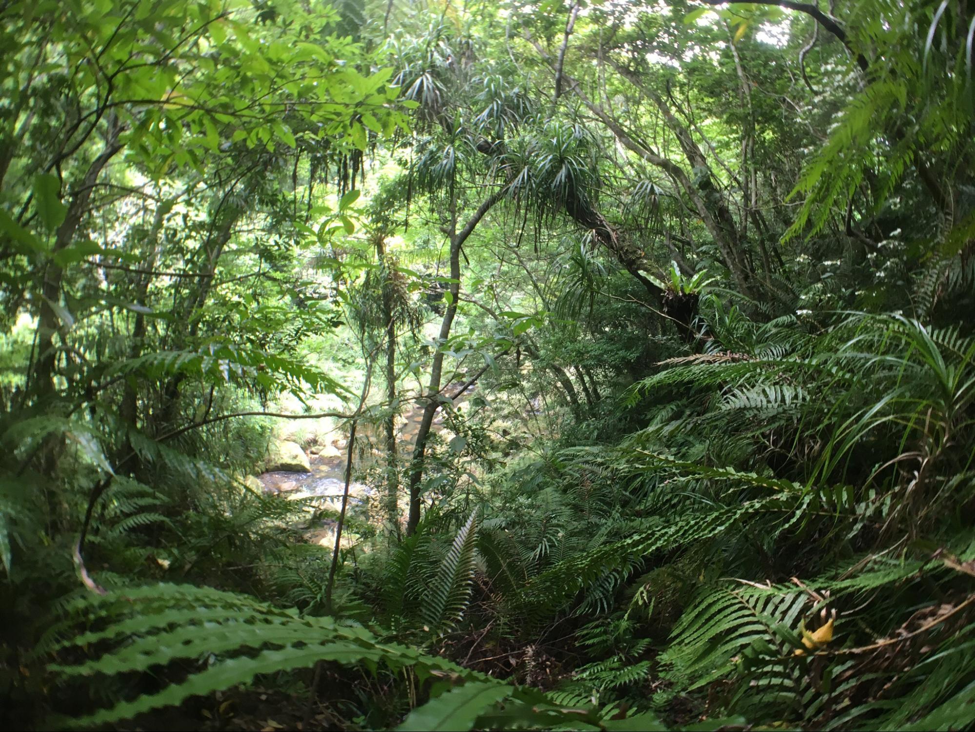 《奥西表のジャングル③》